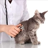 Ветеринарные клиники в Бохане
